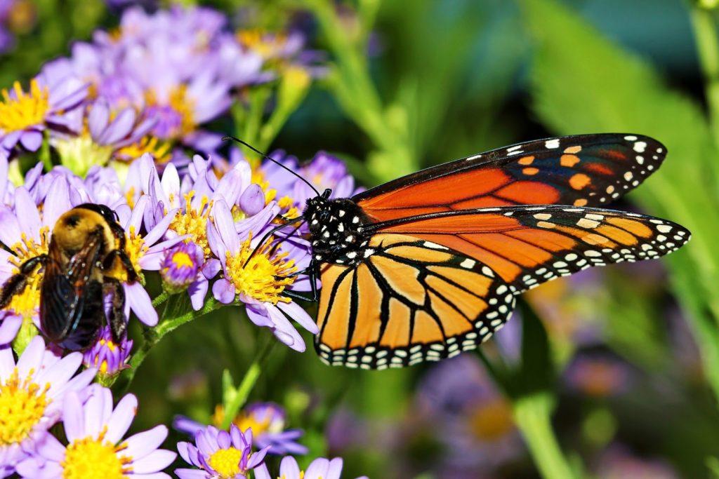 Disney's new solar farm will create a pollinator-friendly habitat for wildlife.