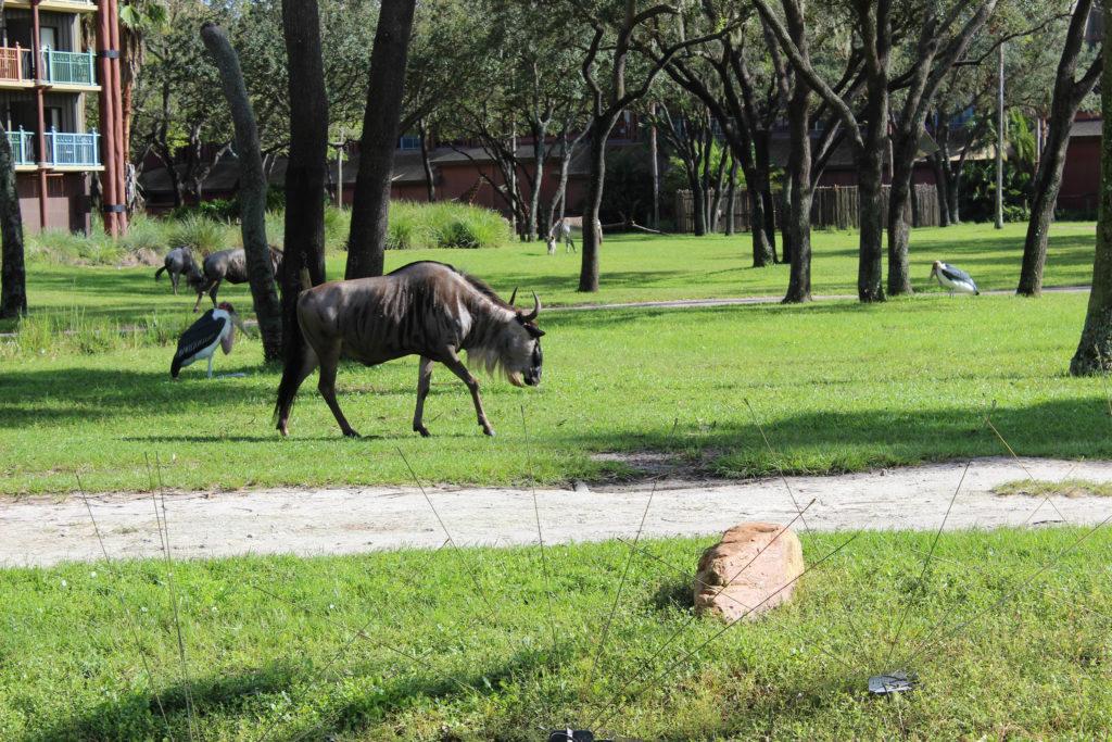 animal-kingdom-villas-savanna4