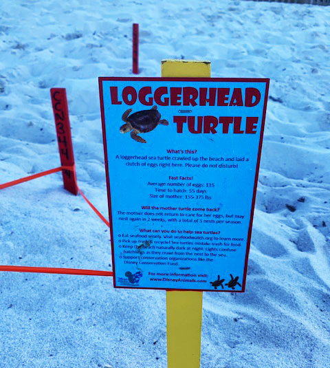 Disney DVC Vero Beach Turtle Nests