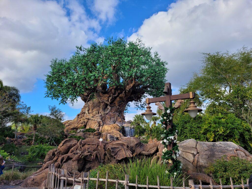 Tree of Life at Animal Kingdom