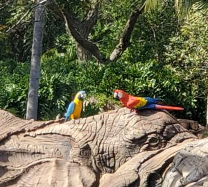 Parrots at Disney's Animal Kingdom Park