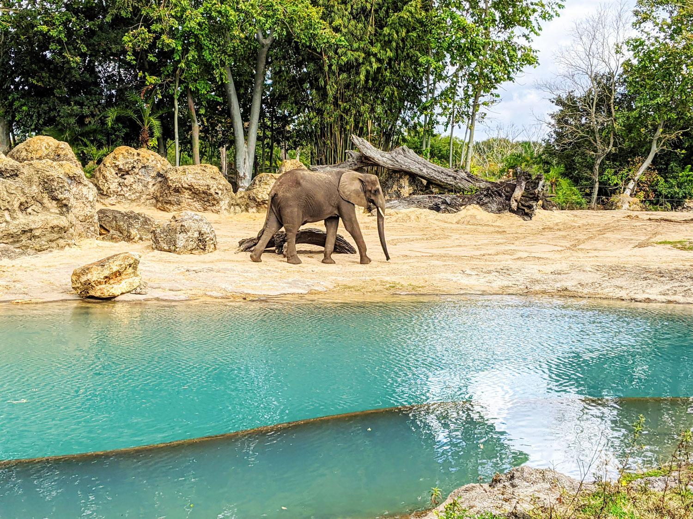 disney's animal kingdom safari