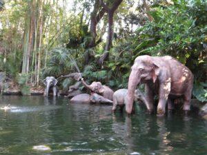 Animals on the Jungle Cruise Attraction - Disney World